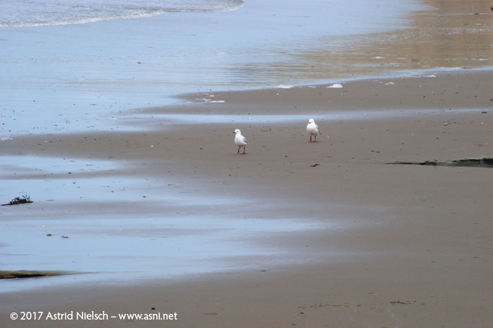 Days at the beach, Wairarapa New Zealand