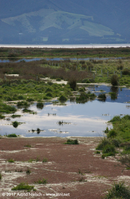 Wetland walks, Lake Wairarapa