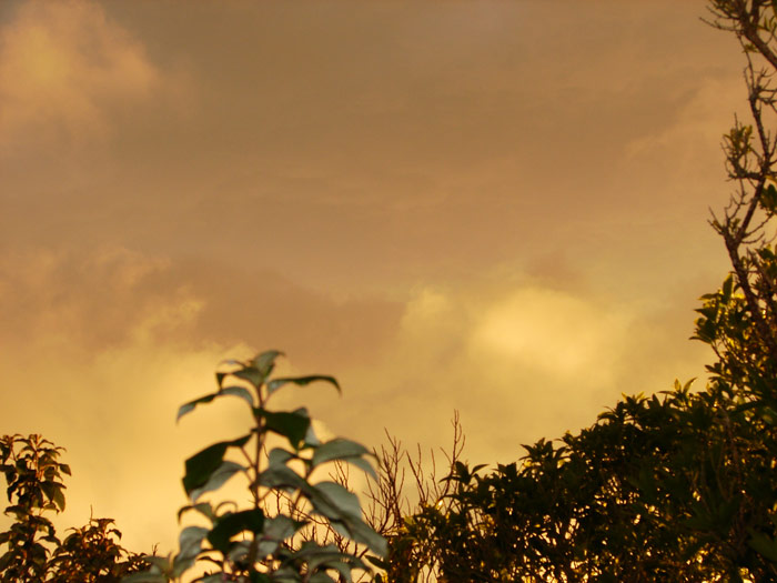 photo: sunset colours in my garden