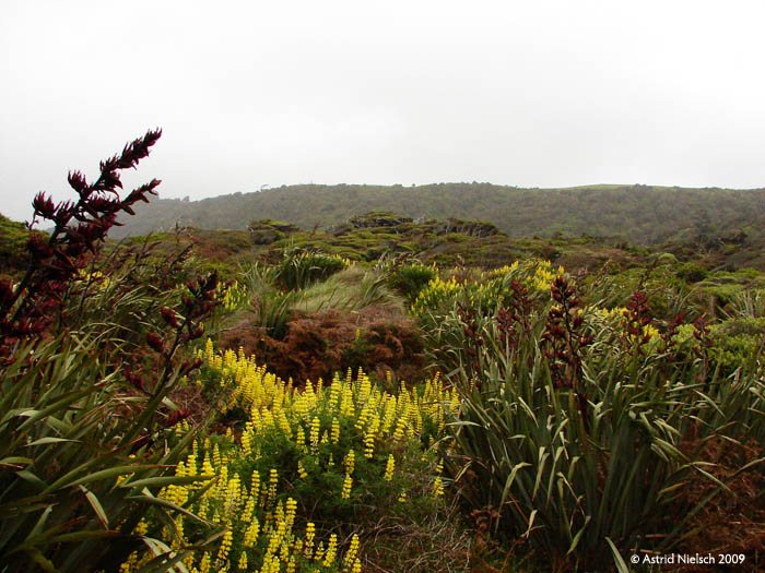 photo: seaside bush