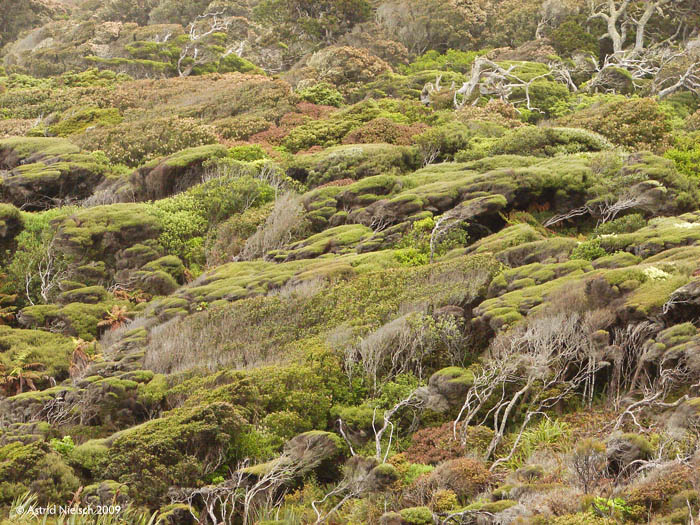 photo: Catlins bush