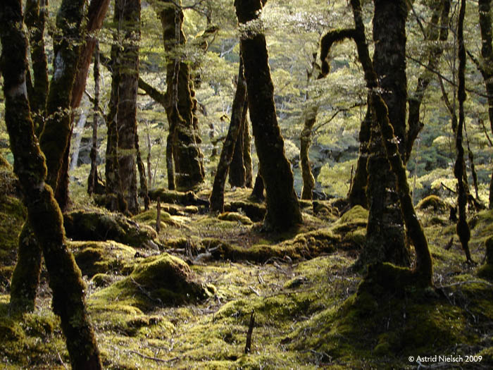 photo: Kepler track: fairy tale forest