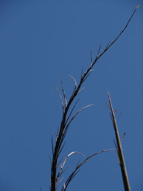 photo: abstract bamboo