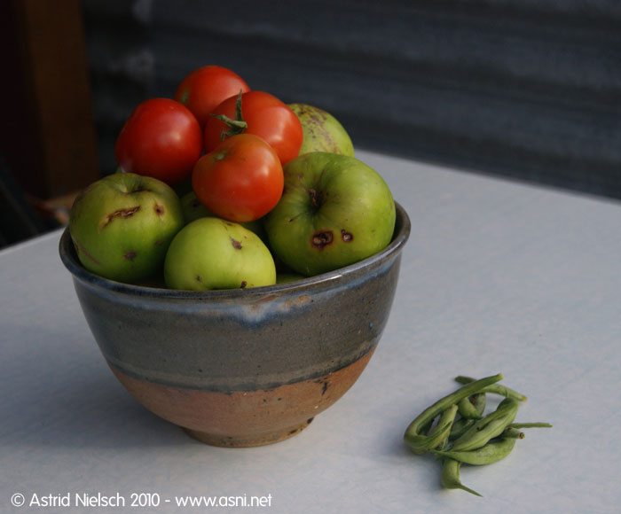 photo: From the garden: today's harvest