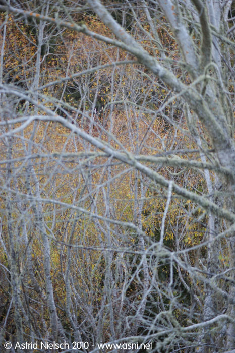 photo: silver and golden trees