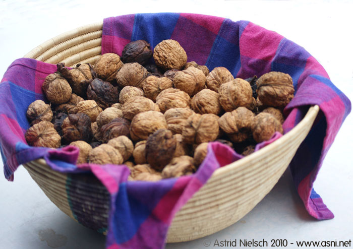 photo: From the garden: walnuts