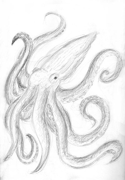 sketch: octo-squid