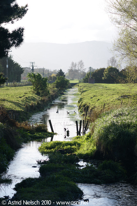 ditch and ducks