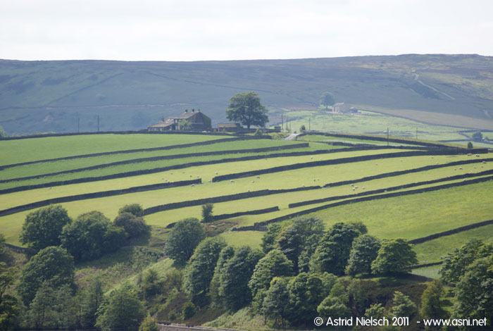 Green fields of Yorkshire