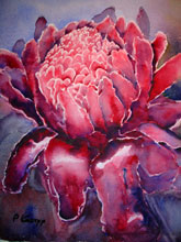 Torch Ginger by Pat Knorpp