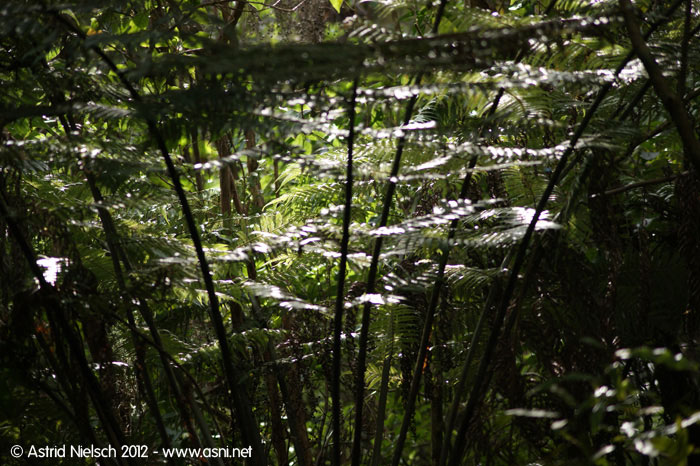 Forest impressions, Waitakere, Auckland