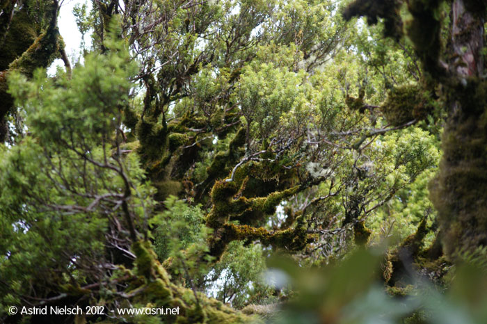 A walk on the wild side, Mt Taranaki
