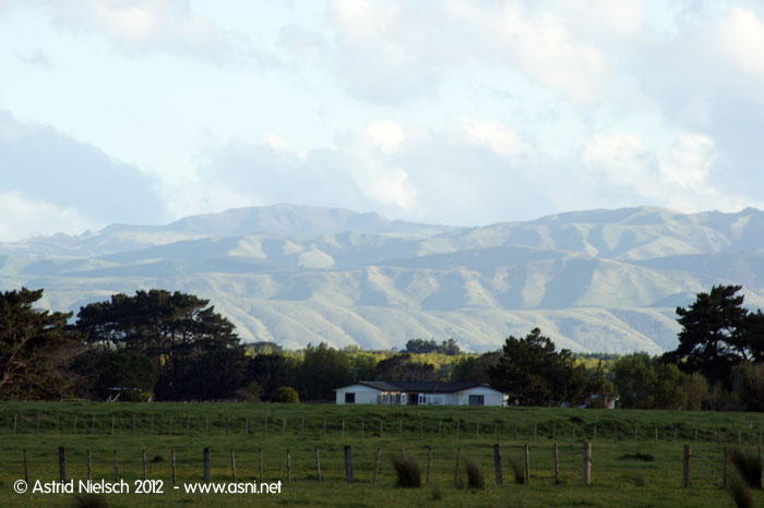 Springtime, South Wairarapa
