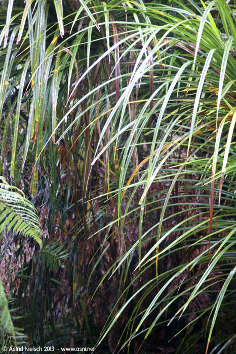 Taranaki in the rain: vegetation at Whangamomona Saddle, Forgotten World Highway