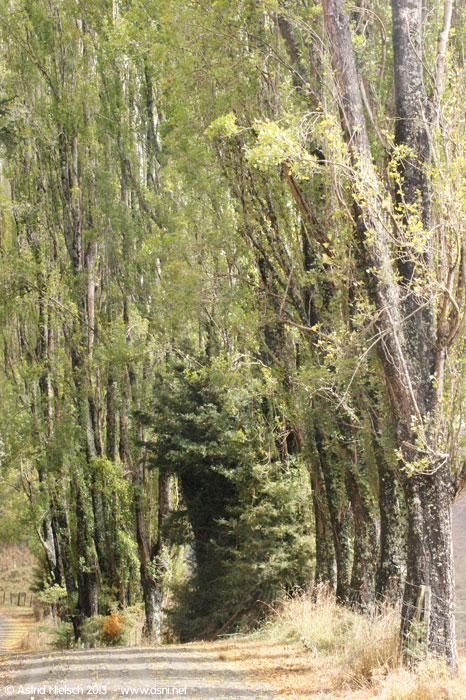 Taranaki in the rain: hills, fences and poplars at Tahora, Forgotten World Highway