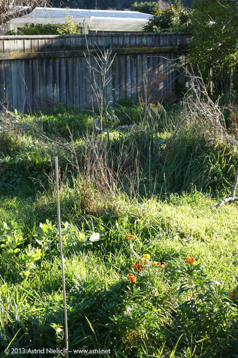 Waiting for Spring: Asni's garden in July