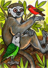 Lemurs: Astrid the Avahy, by Angela Oliver