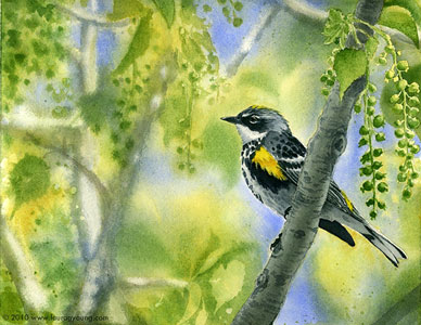 Warbler on the Watch by Laura G. Young