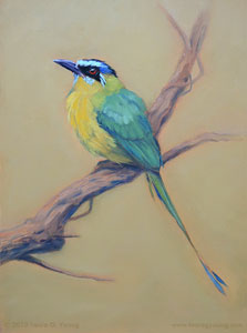 Blue Crowned Motmot by Laura G. Young