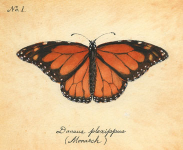 Monarch by Laura G. Young