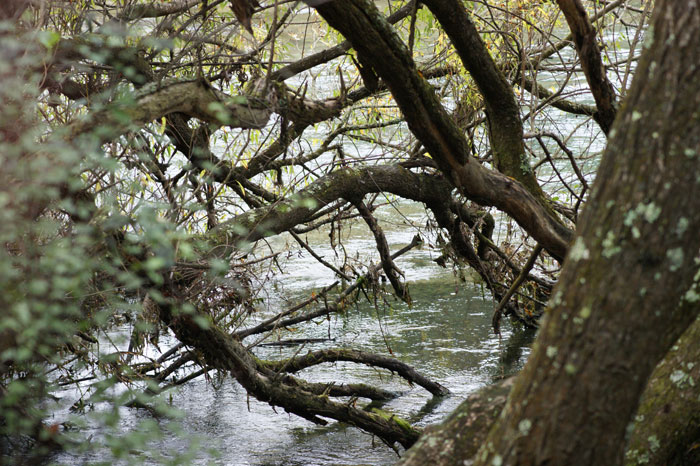Autumn walk – Waikato river, Taupo