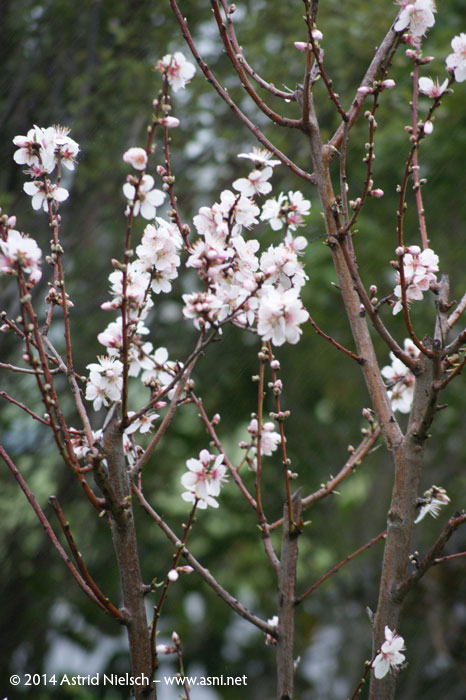Asni's garden in August: springblossomy season