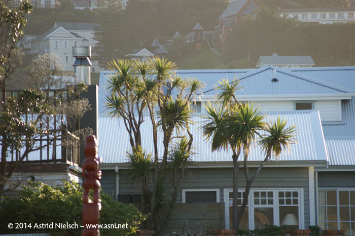 Wellington on a good day: Seatoun houses