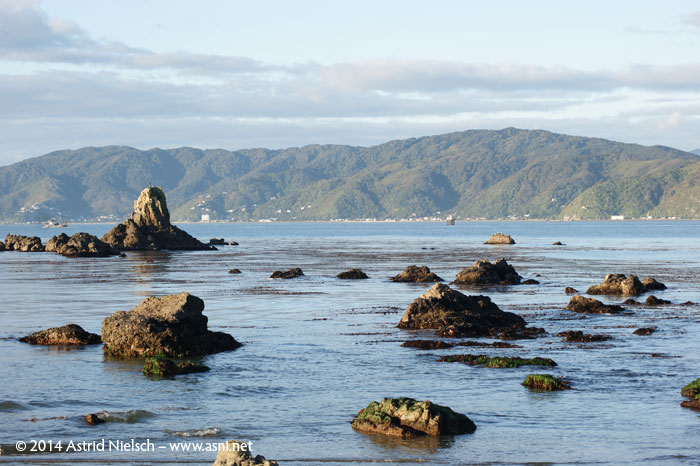 Wellington on a good day: Rocks and waves
