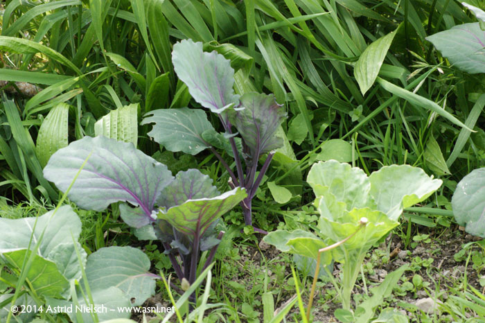 Asni's garden in October: edible garden