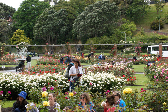 Hunting roses at the Wellington botanical gardens