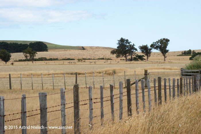 Hot weather in the Wairarapa