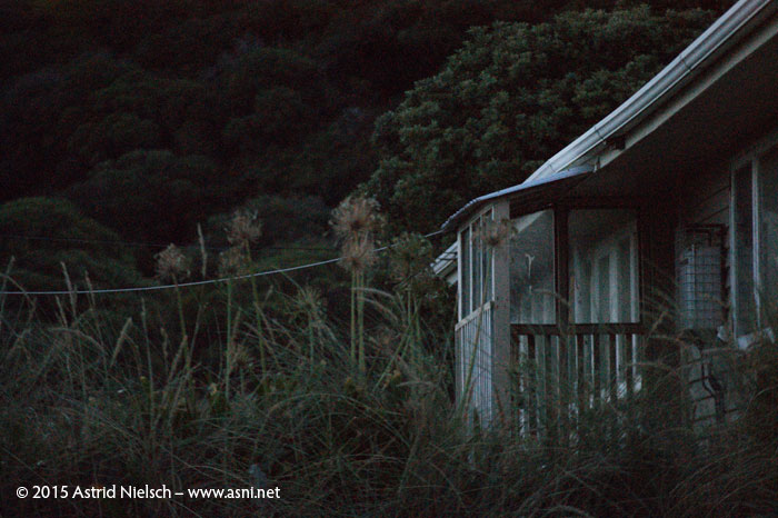 Evening mood at Tora, South Wairarapa