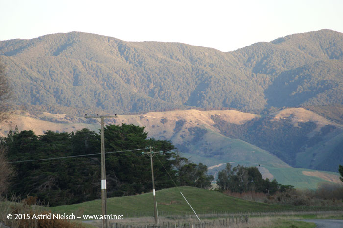 Autumn mood in the South Wairarapa