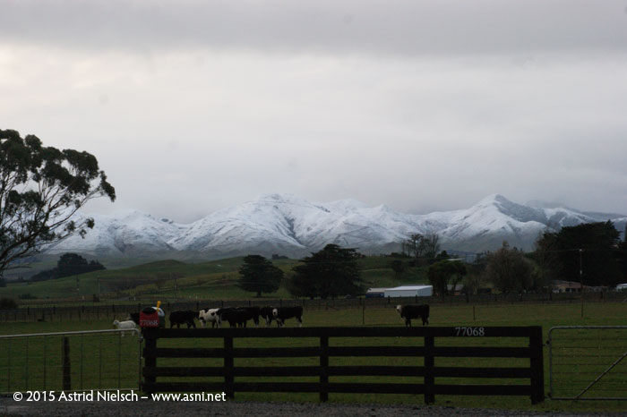 Snow on the Tararuas, Masterton
