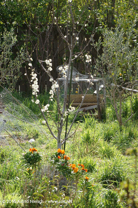 Asni's Garden in September: spring blossoms and a zoo