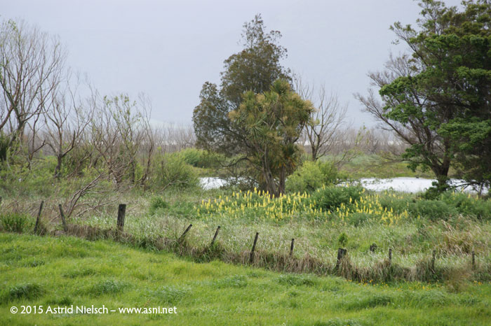 Springtime in the South Wairarapa